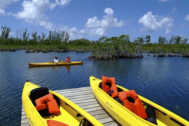 Grand Bahama Island - Kayak Nature Tours, Bahamas